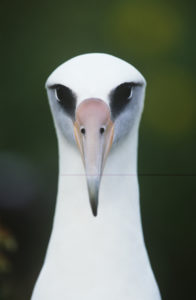 Do you have albatrosses looking you straight in the eye that are weighing you down?